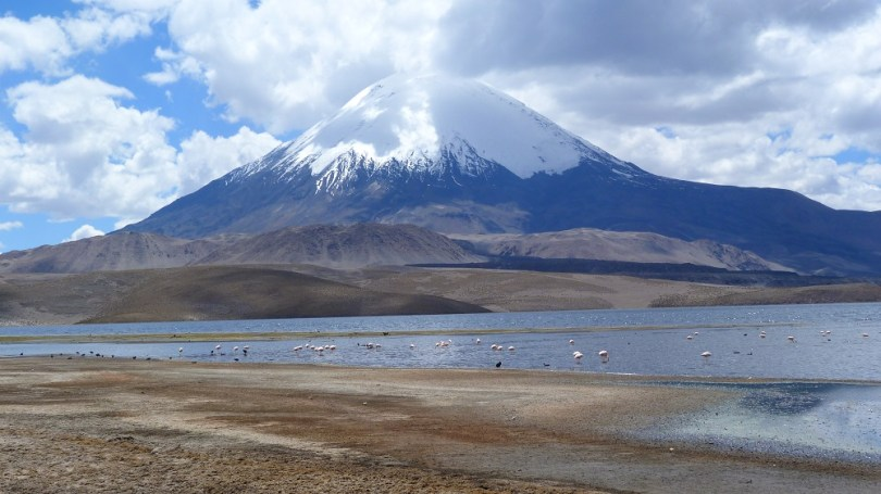 Parinacota flamands lauca