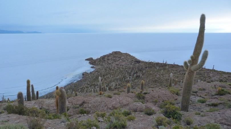 isla del pescado cactus