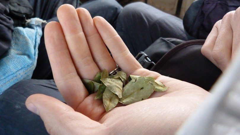 potosi feuilles coca