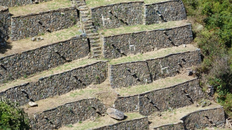 Choquequirao terrasses lamas