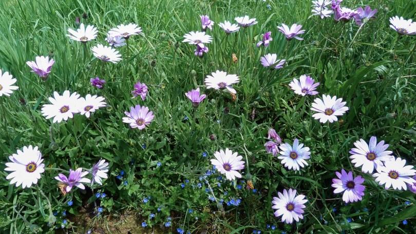 broceliande tante phonsine fleurs