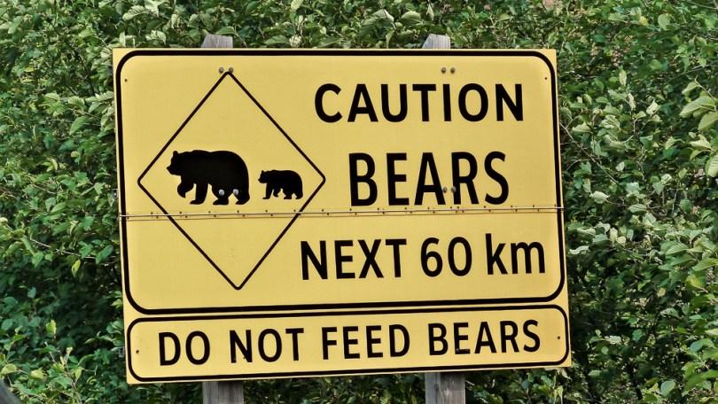 colombie britannique ours noir