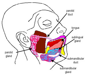 The Histology Guide | Oral