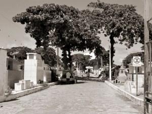 Avenida principal do Cemitério de São José