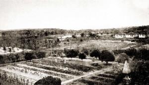 Campo experimental do Aprendizado Agrícola de Satuba em 1921