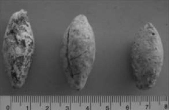 Glandes de plomo procedentes de Nova Classis(Noguera, et al., 2014)