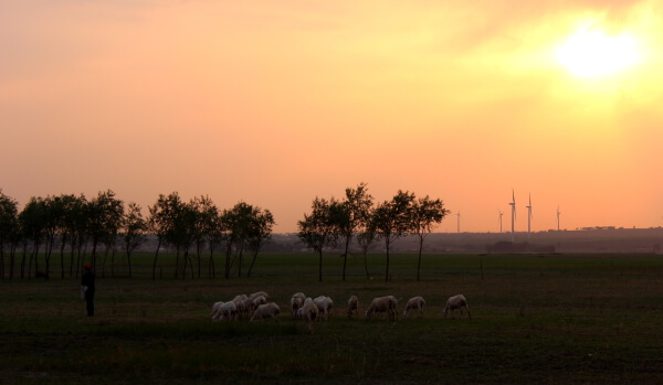 sol-ovejas-china-1