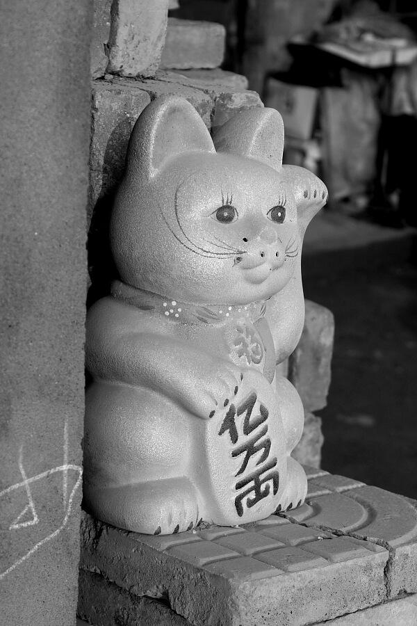 gato-china-2