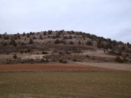 Las ovejas a su paso por Peñacoba
