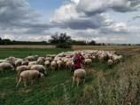 Ricardo con su rebaño de ovejas.