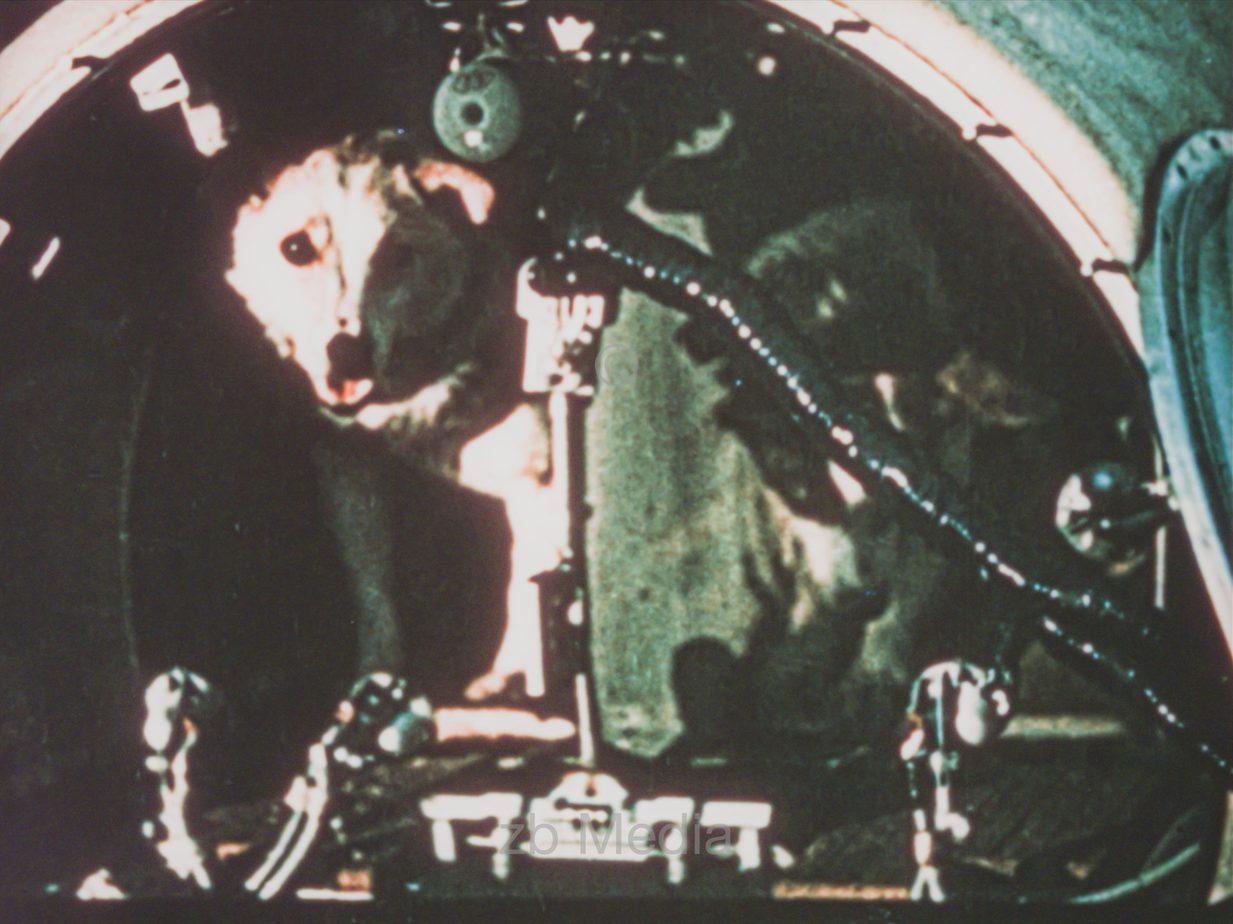 Raumflug-Versuchstiere