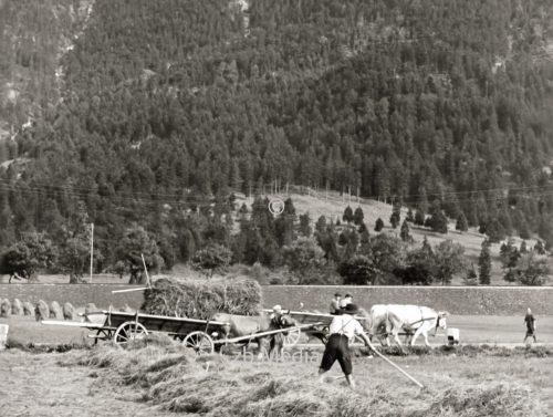 Heuernte in Oberbayern 1937