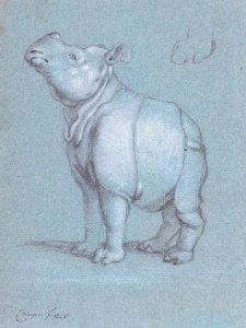 Clara de neushoorn door Petrus Camper