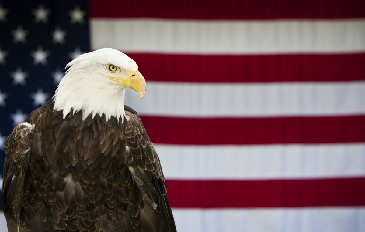 How Did The Bald Eagle Become America S National Bird History