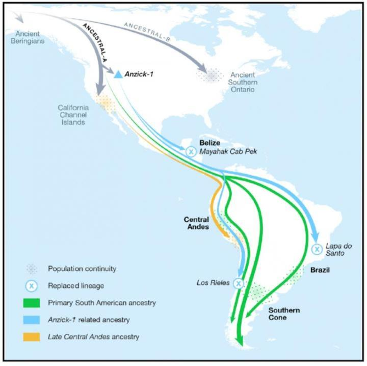 This visual abstract depicts insights into the peopling of the Americas, including four southward migration events and notable population continuity in much of South America after arrival.