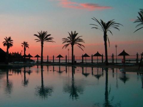 Costa del Sol palmy