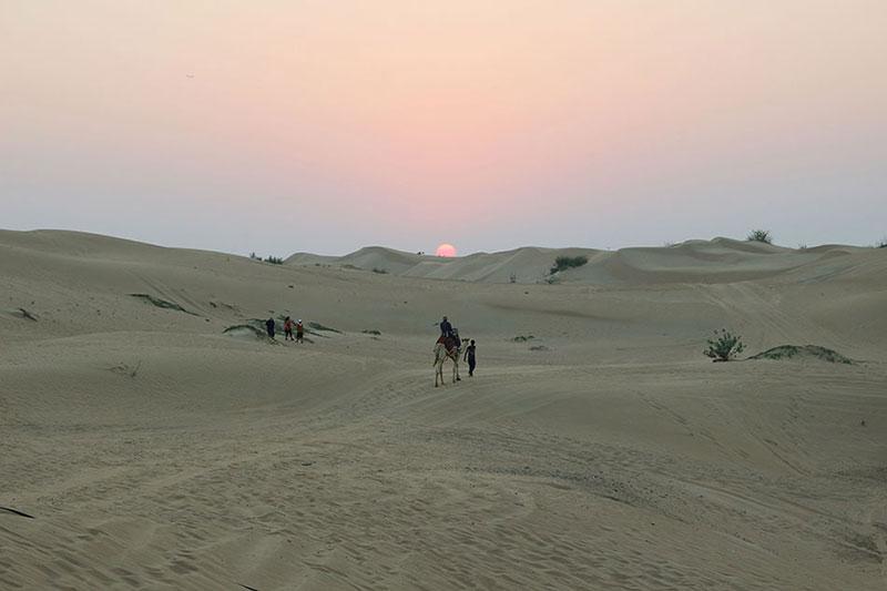Dromadaire au soleil couchant dans le désert à Dubaï