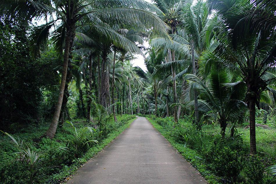 Route au cœur de la jungle sur l'île de Koh Chang en Thaïlande