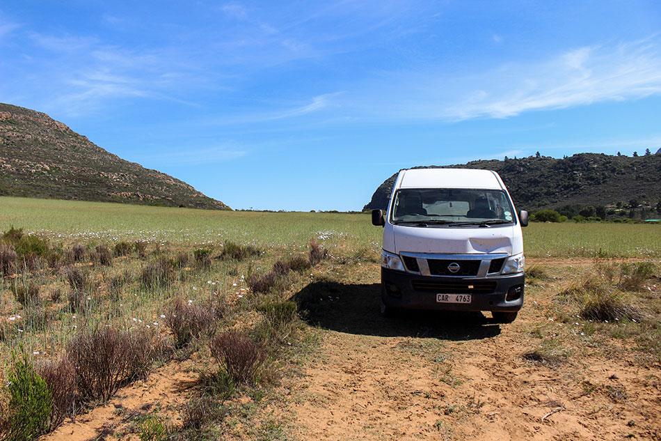 Champ de rooibos à Skimmelberg en Afrique du Sud