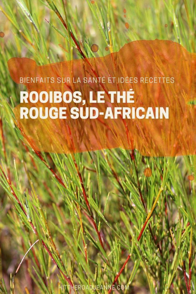 Rooibos, le thé rouge sud-africain: ses bienfaits sur la santé et idées recettes
