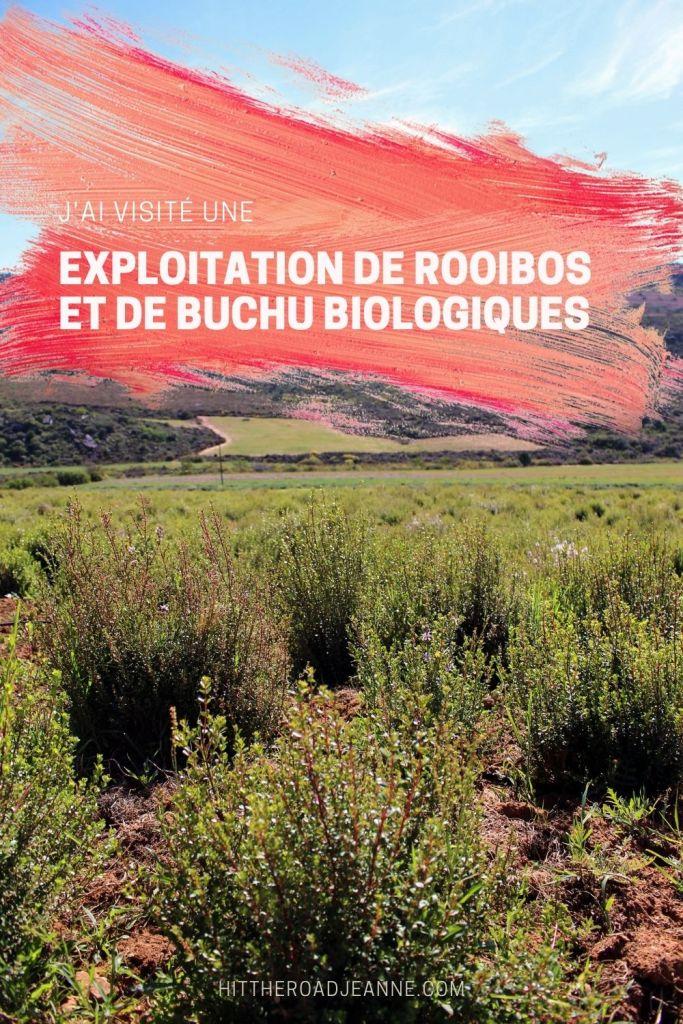 Visite d'une exploitation de rooibos et de buchu biologiques