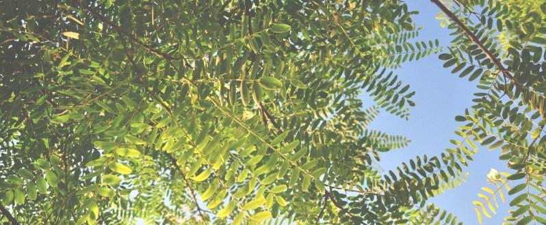 seo evergreen content