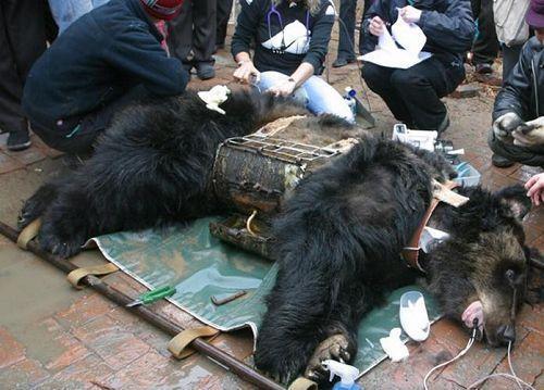 中國野生動保法修訂 被指為野生動物入藥鋪路 | 香港動物報 Hong Kong Animal Post