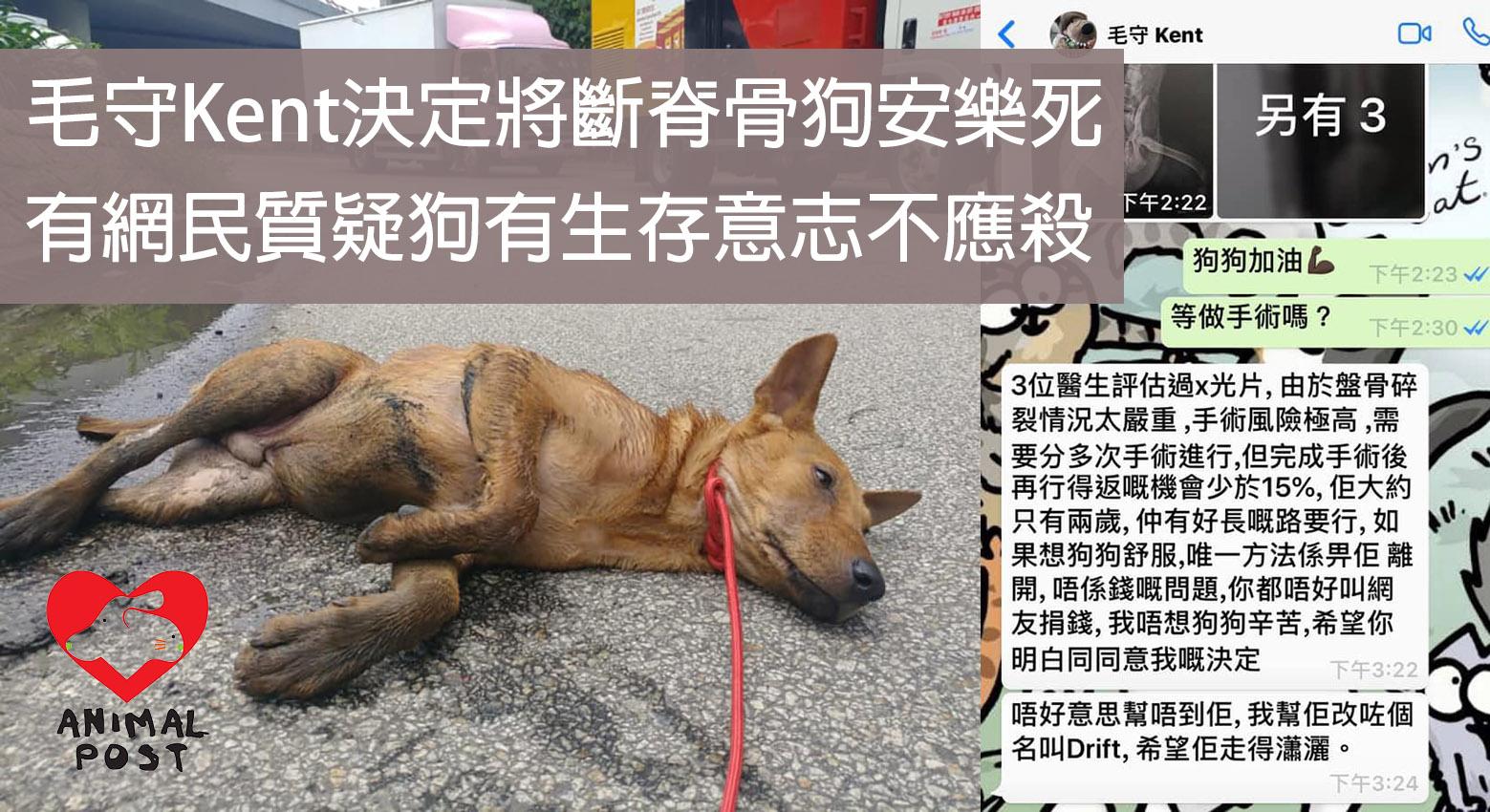 毛守Kent決定將斷脊骨兩歲狗安樂死 網民質疑狗有生存意志不應殺   香港動物報 Hong Kong Animal Post