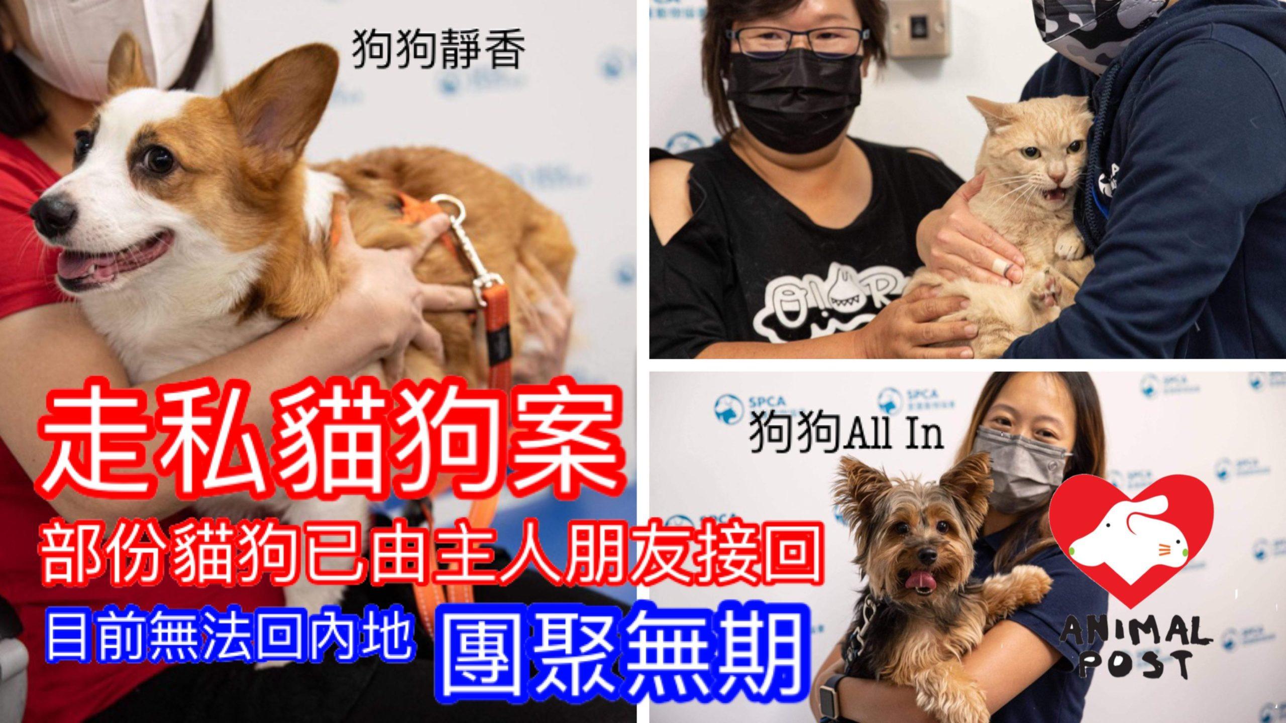 【動物走私案】部分生還貓狗由主人朋友接回 狗主朋友:狗狗在街四處尋主人身影 | 香港動物報 Hong Kong Animal Post