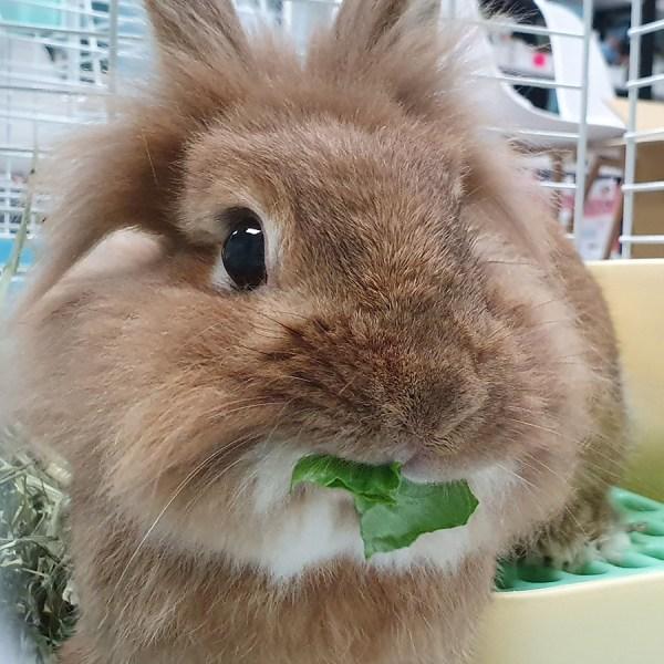 兔酒店/天竺鼠酒店服務