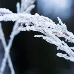 Natural Ways to Strengthen Your Immune System During Winter