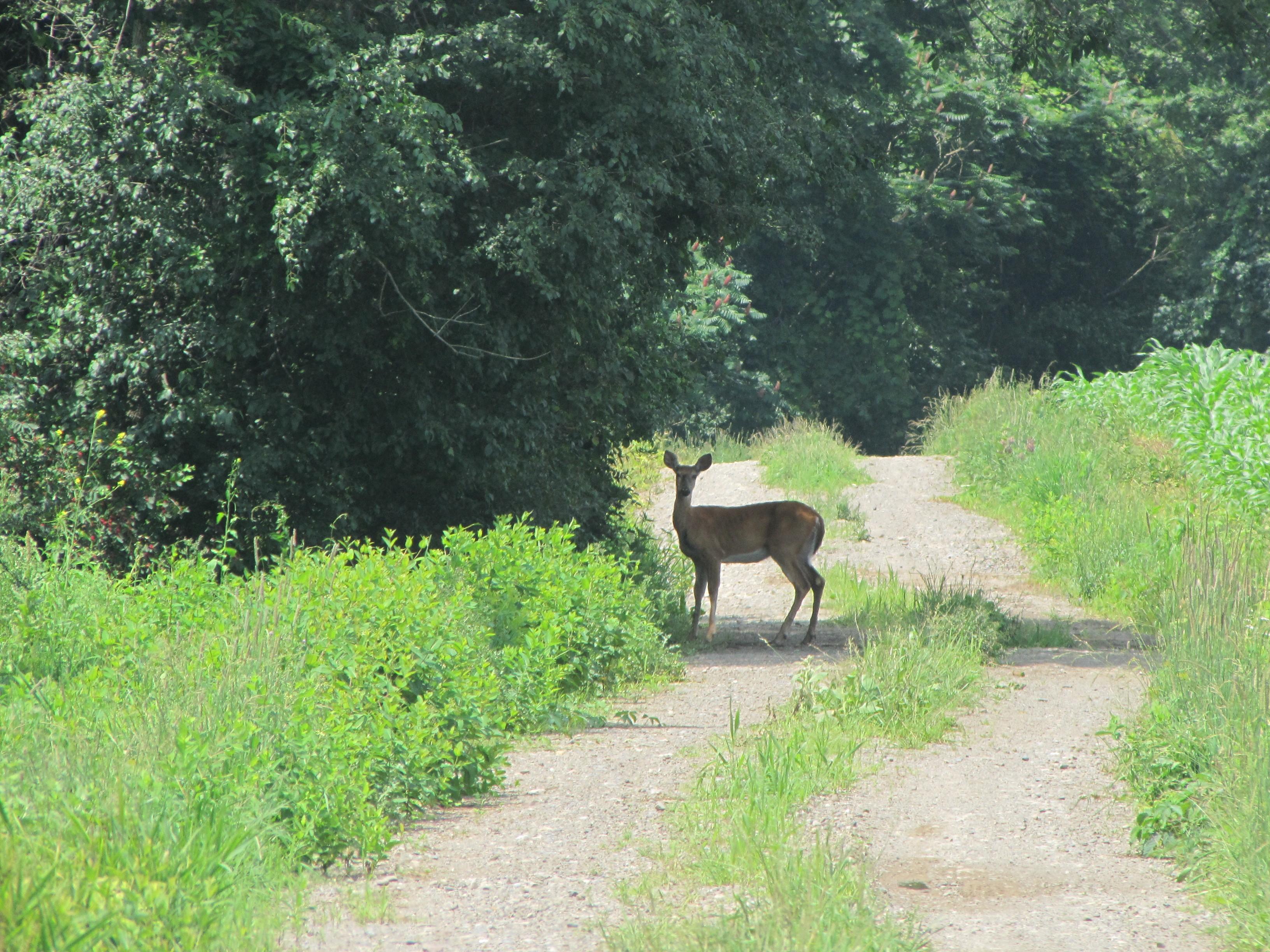 Howland Island Trail at Montezuma Wildlife Management Area