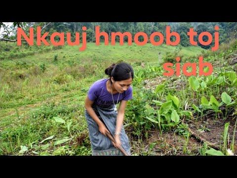 Hmong girl going to the farming.ntxhais hmoob mus ua teb
