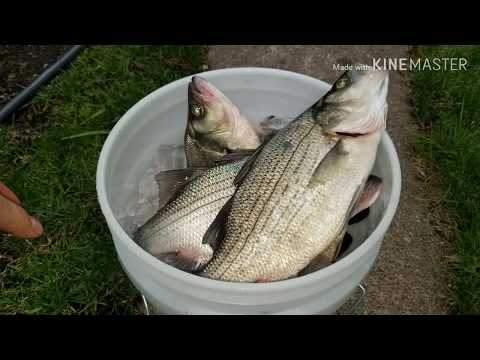 Hmong Free Fishing SD 5/18/2019 (waubay)