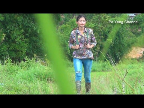 Pa Yeng  finding bamboo shoots , how to   cooking bamboo shoots like hmong style