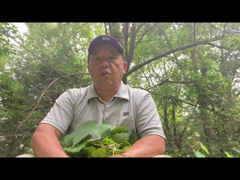 Hmoob Cob Fab - Hmong Chao Fab  - ເຈົ້າຂອງທ້ອງຟ້າມົ້ງ6/21/20