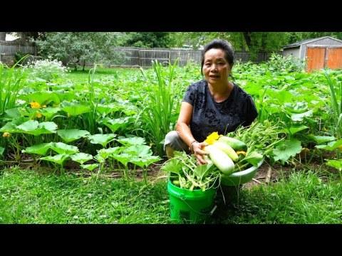 Hmong American Garden/Mus de zaub ntsis taub de dib los ua tshais