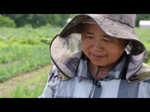 Safely Harvesting Fresh Produce with Food Safety in Mind - Hmong