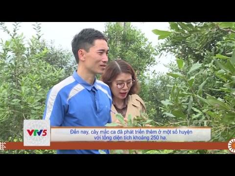 [TIẾNG MÔNG] PHÁT TRIỂN CÂY MẮC CA VÙNG TRUNG DU MIỀN NÚI THANH HÓA | VTV5