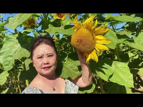Hmong Farming in Fresno California  2021   HD