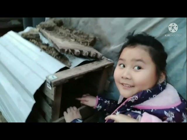 hmong Argentina   pub qaib os 08/06/21