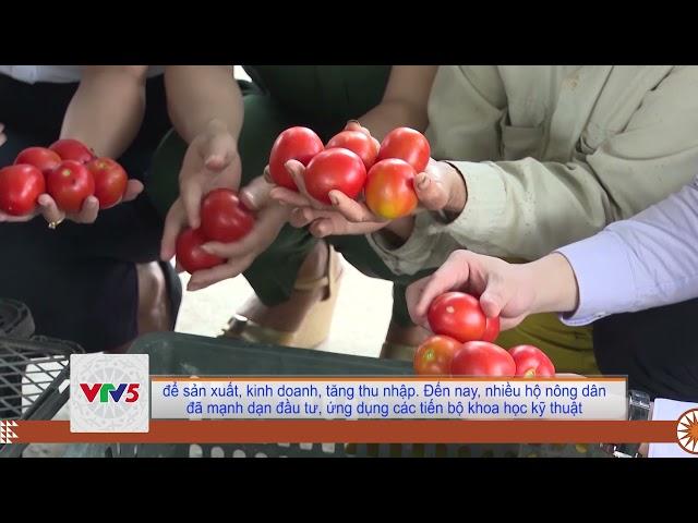 [TIẾNG MÔNG] PHONG TRÀO NÔNG DÂN SẢN XUẤT KINH DOANH GIỎI Ở ĐÔNG SƠN   VTV5