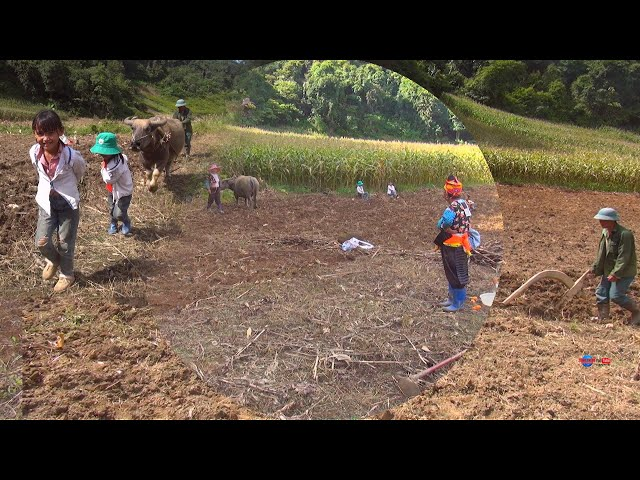 HMONG VILLAGES FARMING NORTH VIETNAM 2021