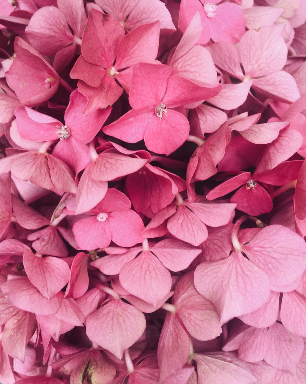 pink petaled flowers close up photography