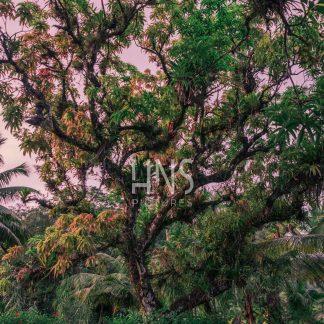 Panama Bocas del Toro Jungle