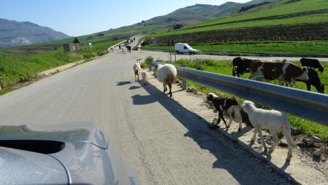 A tam, kde cesta byla,       kráčela zvířátka čilá!