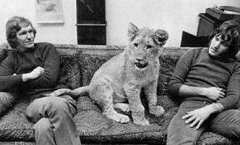 Picture about Heart touching Story of Christian The Lion