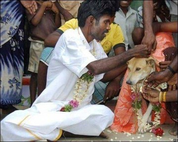 Picture of Man in India Marries Dog