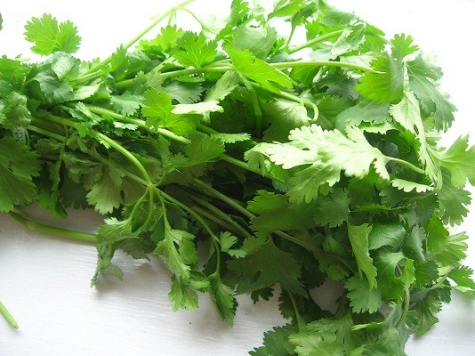 Picture about Cilantro Flushes Mercury from the Body
