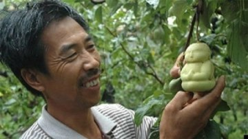 Picture: Chinese Farmer grows Buddha Shaped Pears